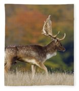 130201p289 Fleece Blanket