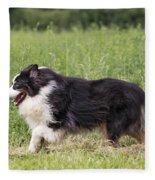 Australian Shepherd Dog Fleece Blanket