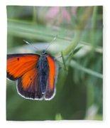 14 Balkan Copper Butterfly Fleece Blanket