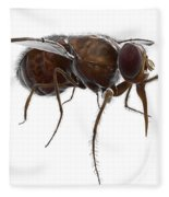 Tsetse Fly Fleece Blanket