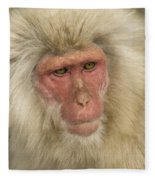Snow Monkey, Japan Fleece Blanket