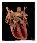 Heart Anatomy Fleece Blanket