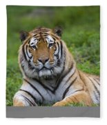Siberian Tiger, China Fleece Blanket