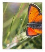 17 Balkan Copper Butterfly Fleece Blanket