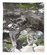 17 Mile Drive Tree Fleece Blanket
