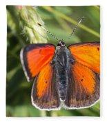 18 Balkan Copper Butterfly Fleece Blanket