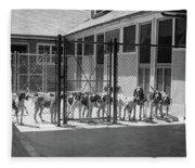 1930s Kennel Yard Full Of Foxhound Dogs Fleece Blanket