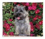 1990s Cairn Terrier Dog Standing Fleece Blanket