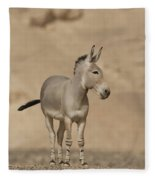 African Wild Ass Equus Africanus Fleece Blanket