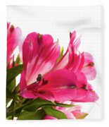 Alstroemeria Flowers Against White Fleece Blanket