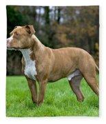 American Staffordshire Terrier Fleece Blanket
