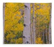Aspen Trees In A Forest, Telluride, San Fleece Blanket