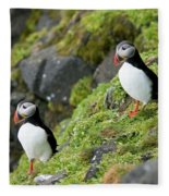 Atlantic Puffin, Fratercula Arctica Fleece Blanket