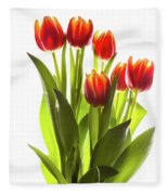 Backlit Tulip Flowers Against White Fleece Blanket
