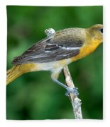 Baltimore Oriole Icterus Galbula Fleece Blanket