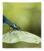 Banded Demoiselle Digital Art Fleece Blanket