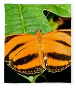 Banded Orange Butterfly Fleece Blanket