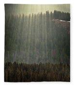Beams Of Sunlight Shine Over Old Growth Fleece Blanket