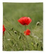 Beautiful Poppies 4 Fleece Blanket