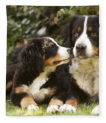 Bernese Mountain Dogs Fleece Blanket
