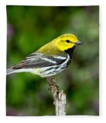 Black Throated Green Warbler Fleece Blanket