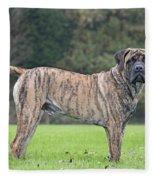 Boerboel Dog Fleece Blanket