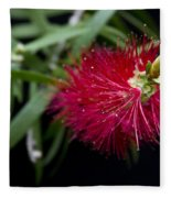 Callistemon Citrinus - Crimson Bottlebrush Hawaii Fleece Blanket