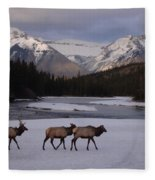 Elk Crossing, Banff National Park, Alberta Fleece Blanket