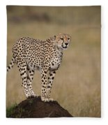 Cheetah On Termite Mound Fleece Blanket