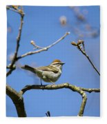 Chipping Sparrow Perched In A Tree Fleece Blanket