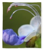 Clerodendrum Ugandense Or Blue Butterfly Bush Fleece Blanket