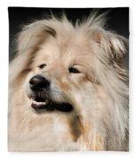 Collie Dog  Fleece Blanket