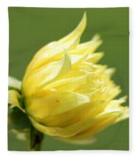 Dahlia Named Kelvin Floodlight Fleece Blanket