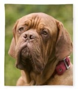 Dogue De Bordeaux Fleece Blanket