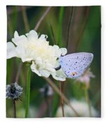 Eastern Tailed Blue Butterfly On Pincushion Flower Fleece Blanket