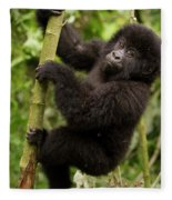 Endangered Mountain Gorillas Habitate Fleece Blanket