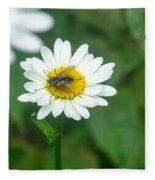 Fly On Daisy 3 Fleece Blanket