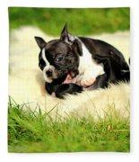 French Bulldoggs Fleece Blanket