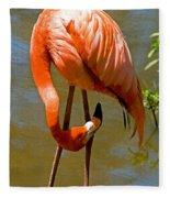 Greater Flamingo Fleece Blanket
