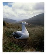 Grey-headed Albatross Fleece Blanket
