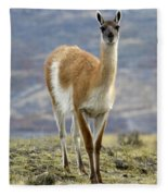 Guanaco Fleece Blanket