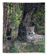 Jaguar Panthera Onca, Pantanal Fleece Blanket