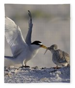 Least Tern Feeding It's Young Fleece Blanket