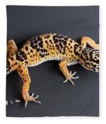 Leopard Gecko Eublepharis Macularius Fleece Blanket