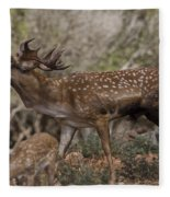 Mesopotamian Fallow Deer 3 Fleece Blanket