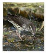 Northern Waterthrush Fleece Blanket