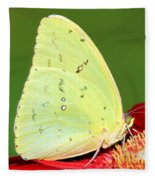 Orange Barred Sulfur Butterfly Fleece Blanket