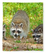 Raccoons Fleece Blanket