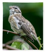 Rose-breasted Grosbeak Fleece Blanket