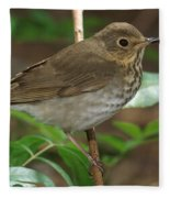 Swainsons Thrush Fleece Blanket